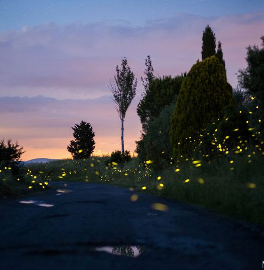 A bunch of fireflies on a country road near Siena. Photo by Matteo Dunchi.