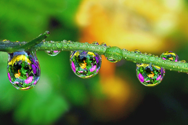 Raindrops and colors.