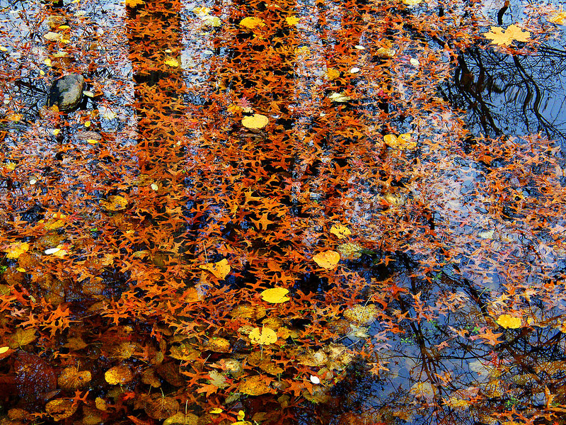 Leaves in water and reflections.