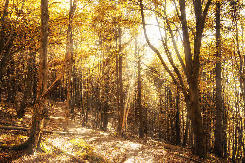 Light in the wood.