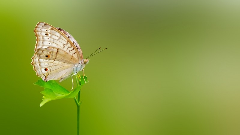 Butterfly on a green leaf.