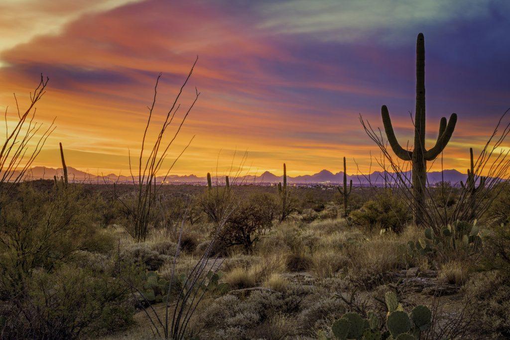 Desert landscape. Photo by Antoine Buchet